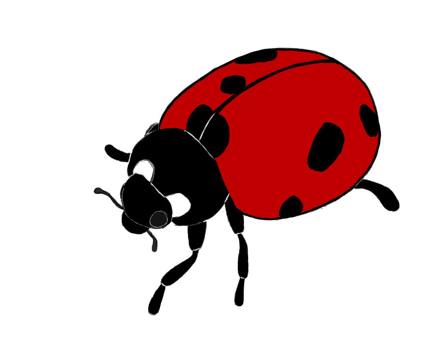 873x702 Coloring Pages Cute How To Draw Lady Bug A Ladybug Vew Coloring