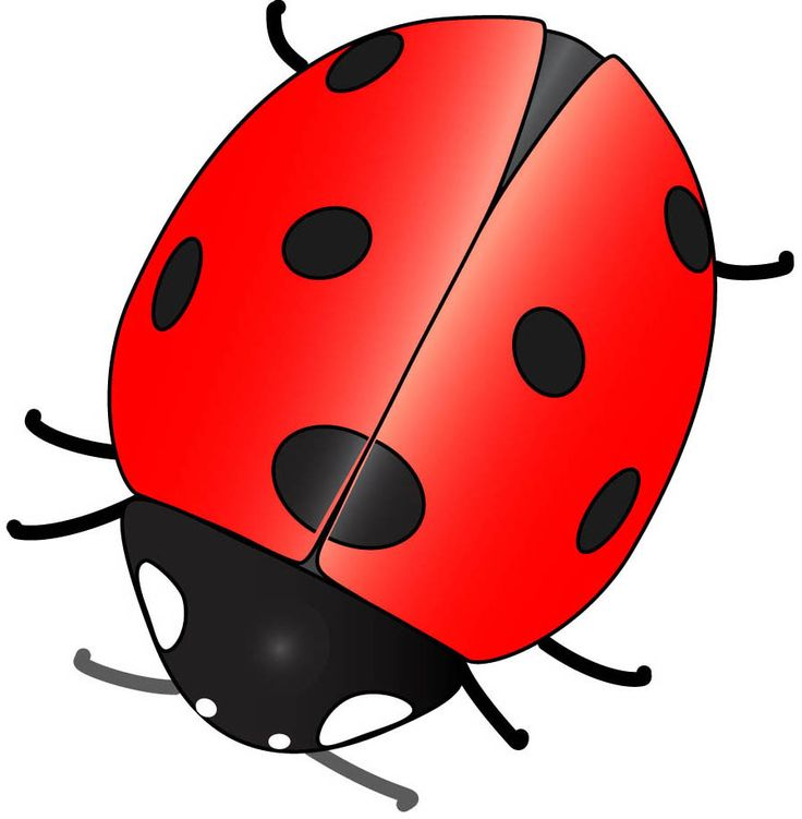 736x751 91 Best Ladybugs Images Caterpillar, Beautiful