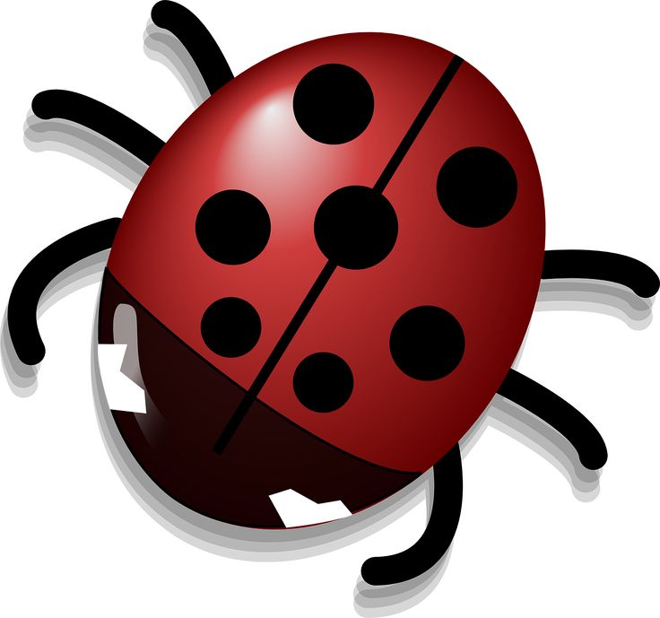 736x689 15 Best Ladybug Images Pictures, Lady Bug And Polka