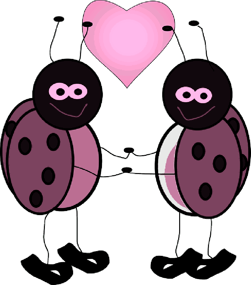 800x909 Ladybugs, Heart, Love, Bugs, Cute, Insect, Valentine