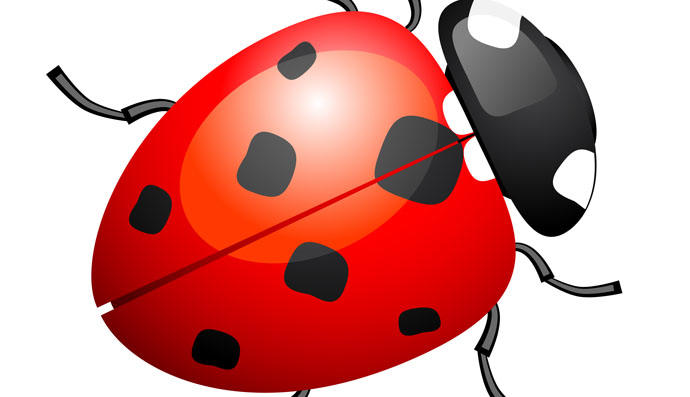 690x397 Ladybug Vector Amp Graphics To Download
