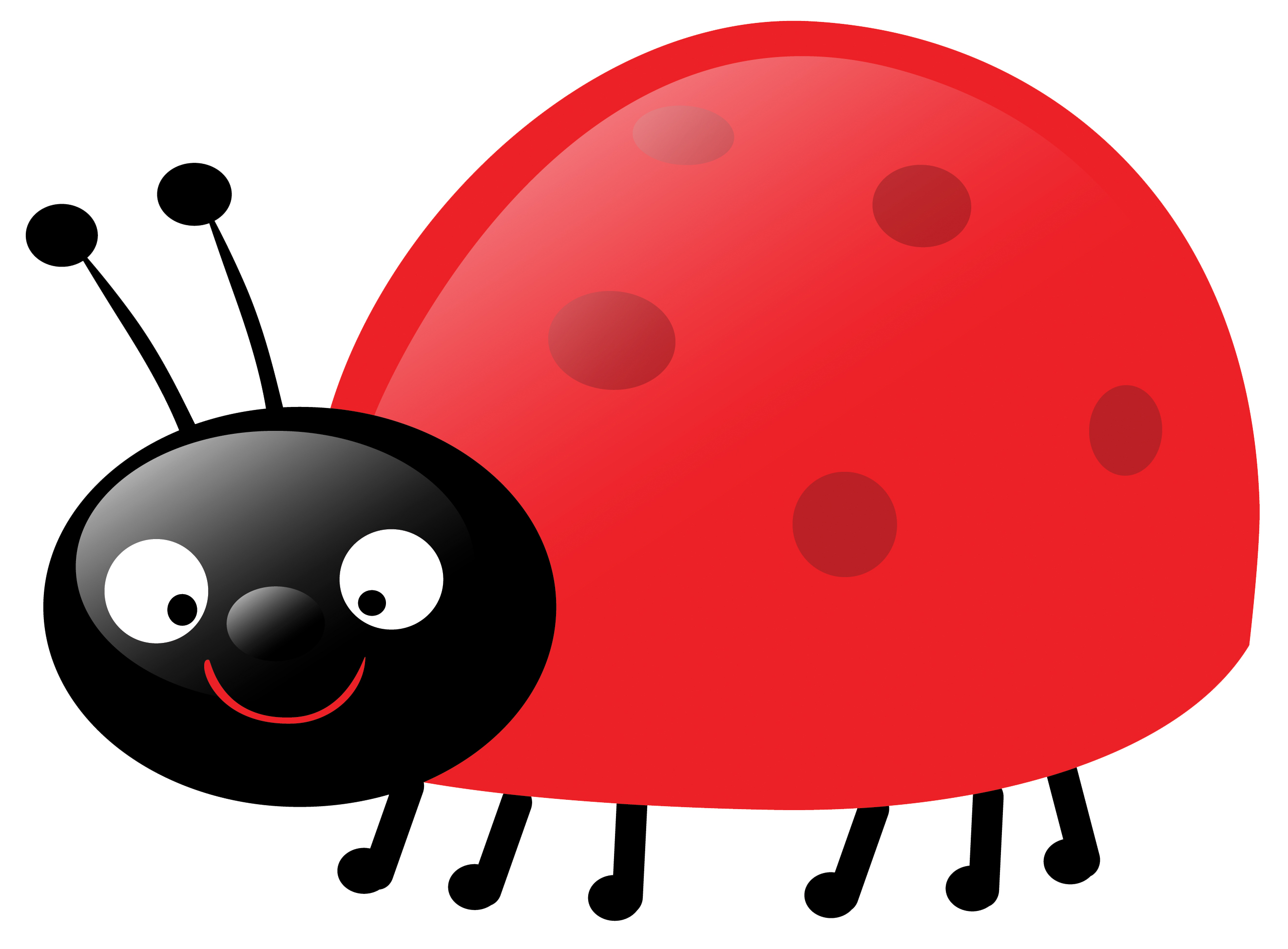 2643x1947 White Flower Clipart Cute Ladybug