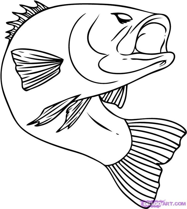 736x823 Best How To Draw Fish Ideas Fish Sketch, Fish