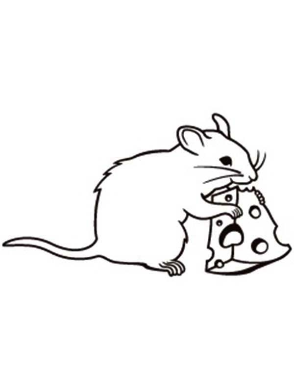 Cute Rat Drawing | Free download on ClipArtMag