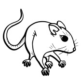 168x168 Brown Rat Rat Draw Clipart Panda