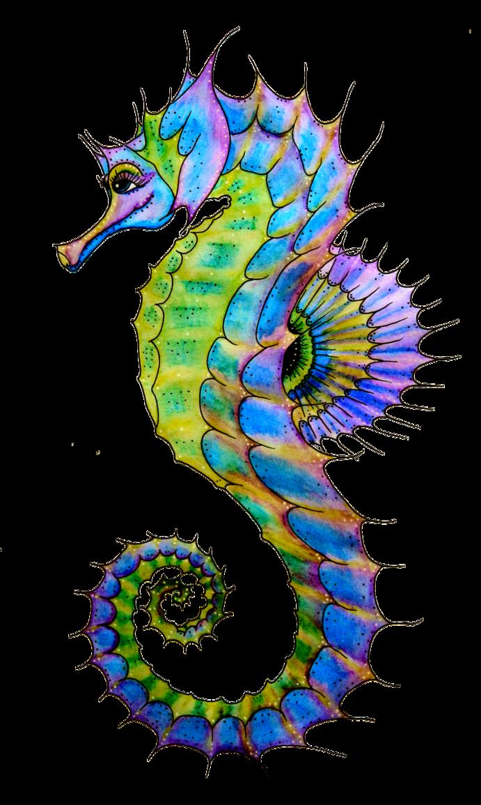691x1155 Seahorse Clipart 3