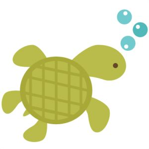 300x300 27 best turtles images Drawings, Home remedies and