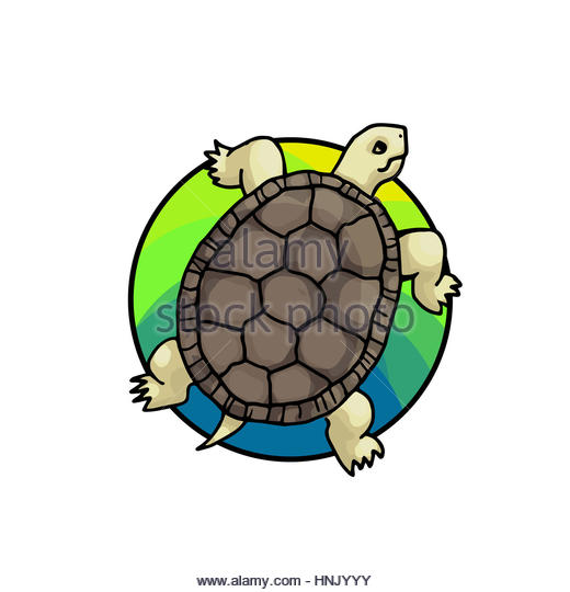 520x540 Zoo sea turtle clipart, explore pictures