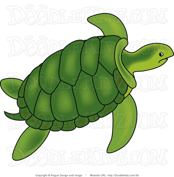 736x750 82 best Turtles images Clip art, Colors and Dragons