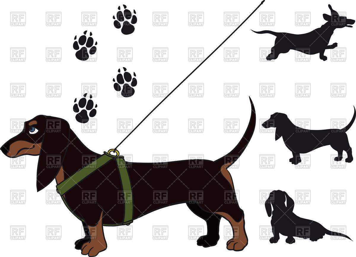 1200x866 Funny Shorthair Dachshund Standing In Breast Band And Leash Free