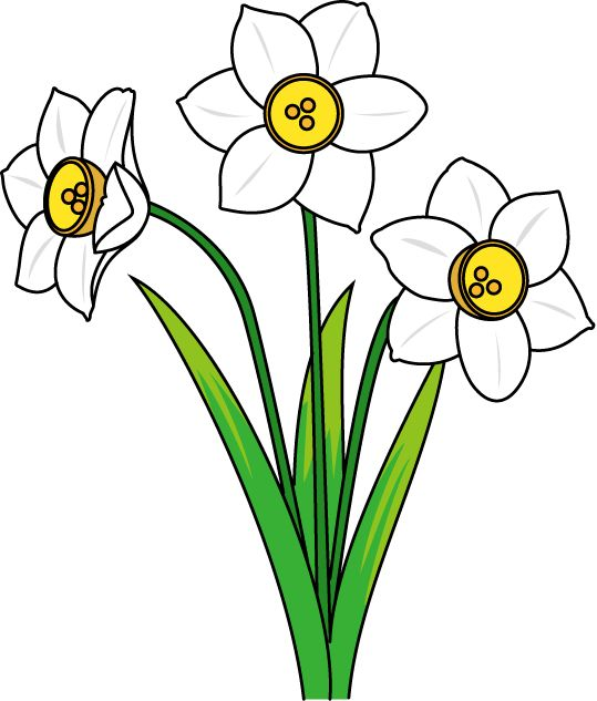 Daffodil Outline Free Download On Clipartmag