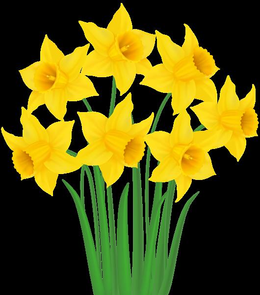 daffodil cartoon clipart free download best daffodil Beautiful Flower Clip Art Flower Drawings Clip Art