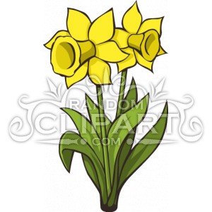 300x300 Cartoon Daffodils Collection 65