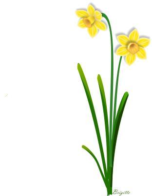 312x403 Daffodil Clipart Narcissus Flower