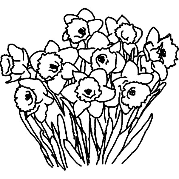 Daffodil clipart black and white free download best daffodil 600x600 drawn daffodil black and white mightylinksfo