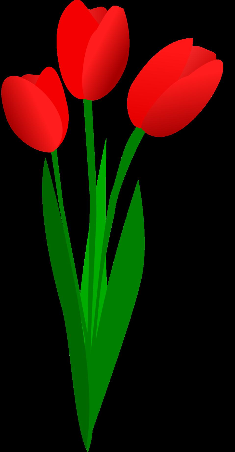958x1838 Daffodil Clipart Narcissus Flower