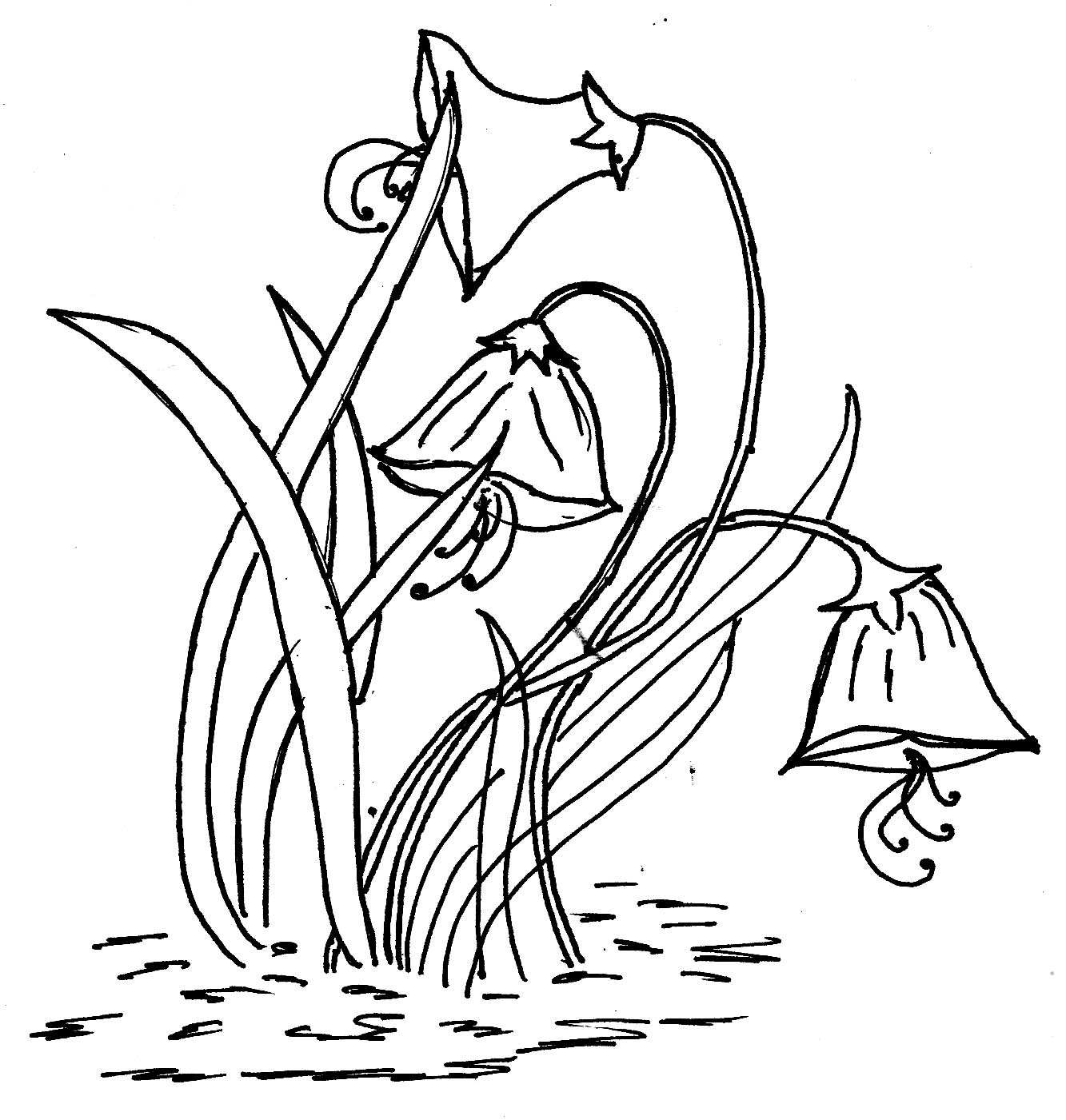 Daffodil Outline Free Download Best Daffodil Outline On