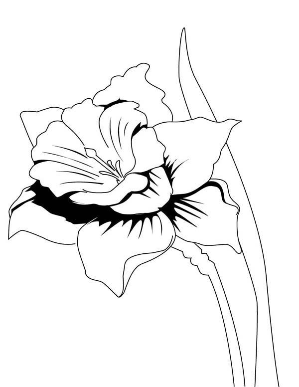 600x776 Colouring Pages For Daffodils Realistic Peacock Coloring Pages