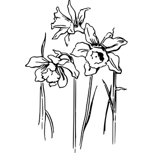 300x300 Daffodils 2 Clipart, Cliparts Of Daffodils 2 Free Download (Wmf