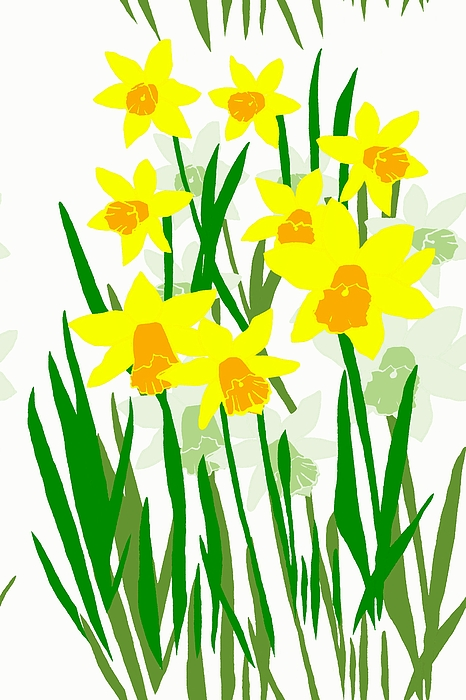 466x700 Daffodils Drawing Digital Art By Barbara Moignard