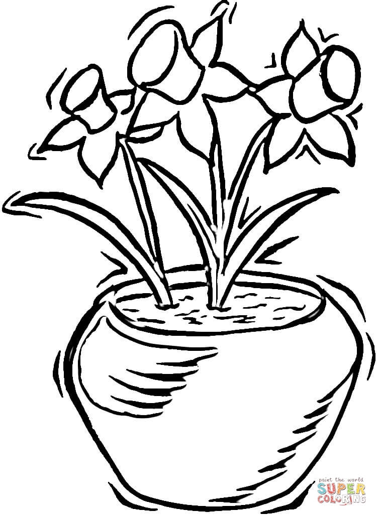 750x1028 Daffodils Coloring Page Free Printable Coloring Pages