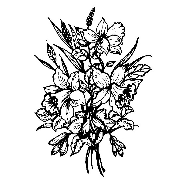 600x600 Drawn Daffodil Black And White