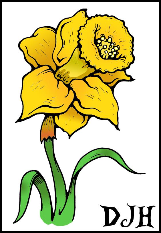 563x814 Drawn daffodil step by step