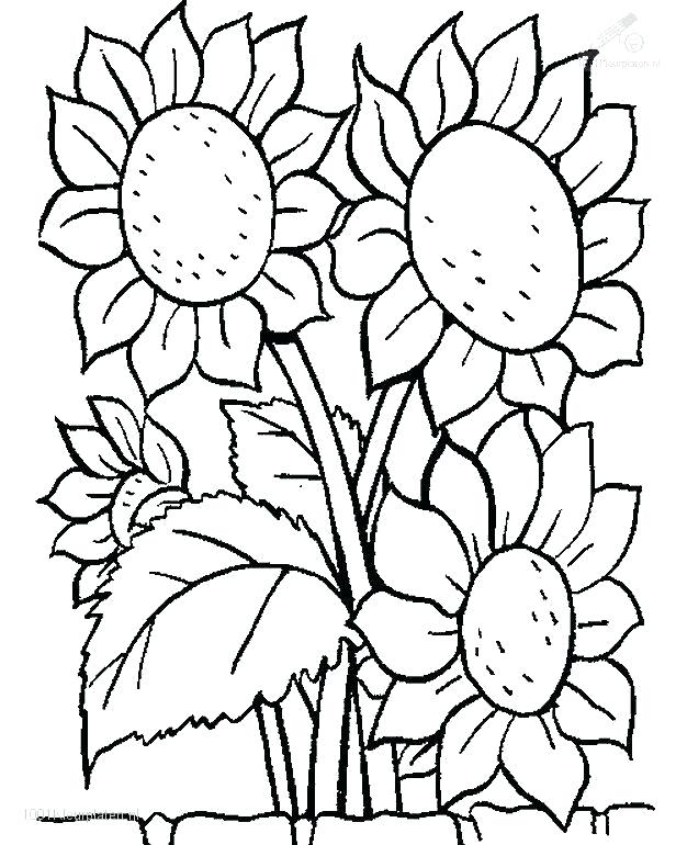 616x770 Flowers Coloring Pages Daffodils Flower