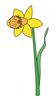 215x382 How To Draw A Daffodil, Flowers, Plants, Spring, Easy Step By Step