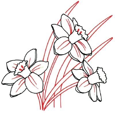 400x392 How To Draw A Daffodil In 5 Steps Daffodils, Drawings And Art