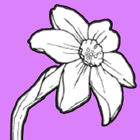 275x275 How To Draw A Narcissus Or Daffodil Flower With Easy Step By Step