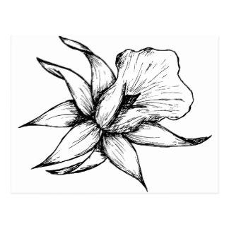 324x324 Vintage Daffodil Postcards Zazzle