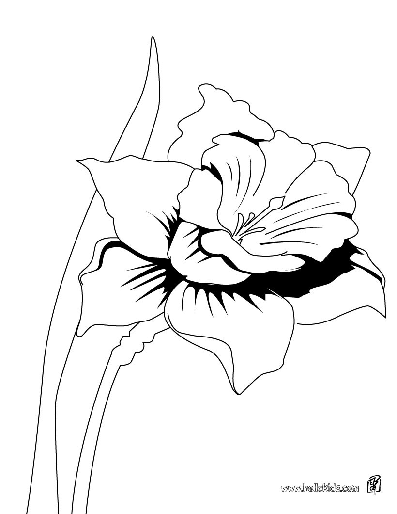 820x1060 Wild Daffodil Coloring Pages