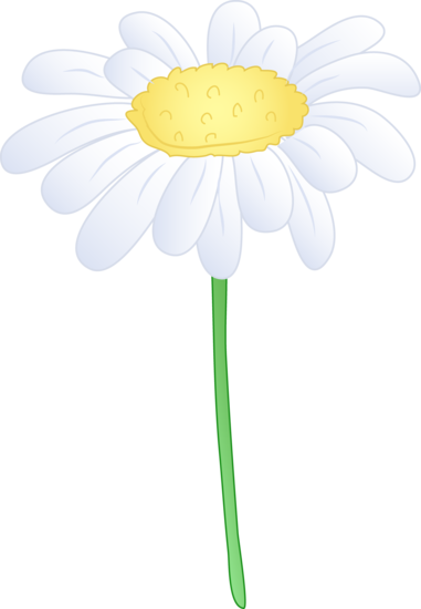 381x550 Single White Daisy Flower