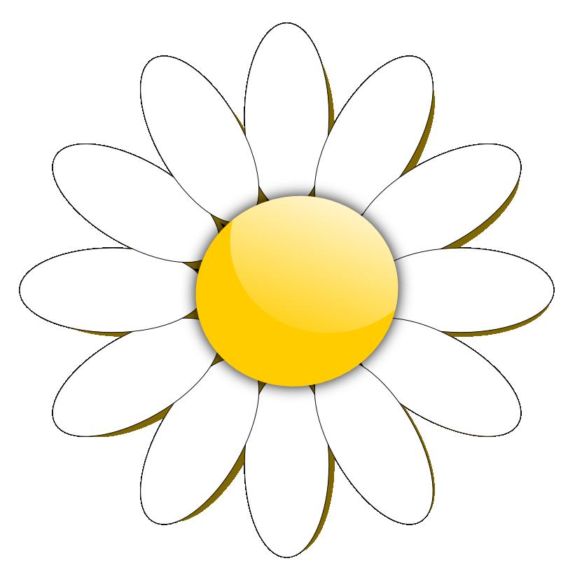 831x824 Daisy Clipart