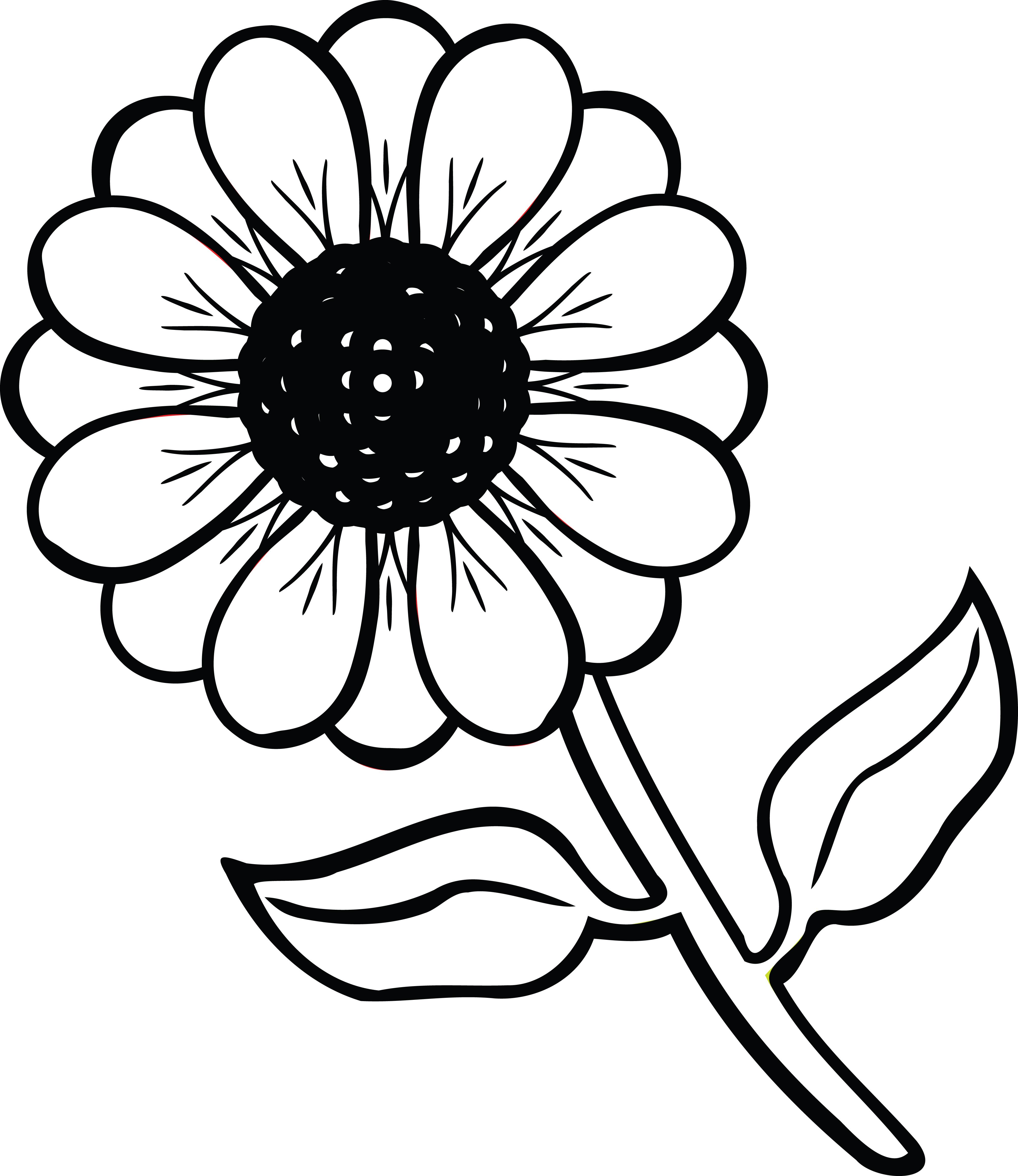 4000x4620 Daisy Clipart Flower Plant