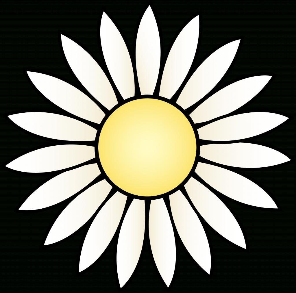 1024x1014 Flower Head Drawing White Daisy Flower