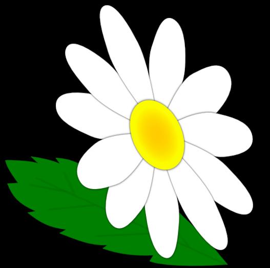 527x523 Daisy Flower Clipart