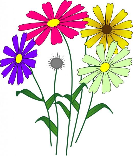 520x609 Daisy Clipart Colorful Daisy