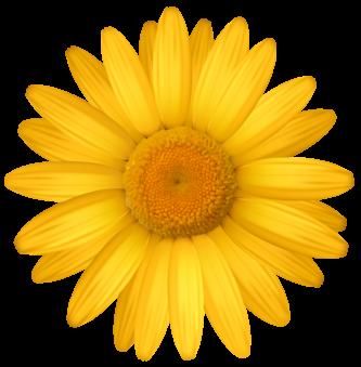 333x339 Gerbera Clipart Yellow Daisy