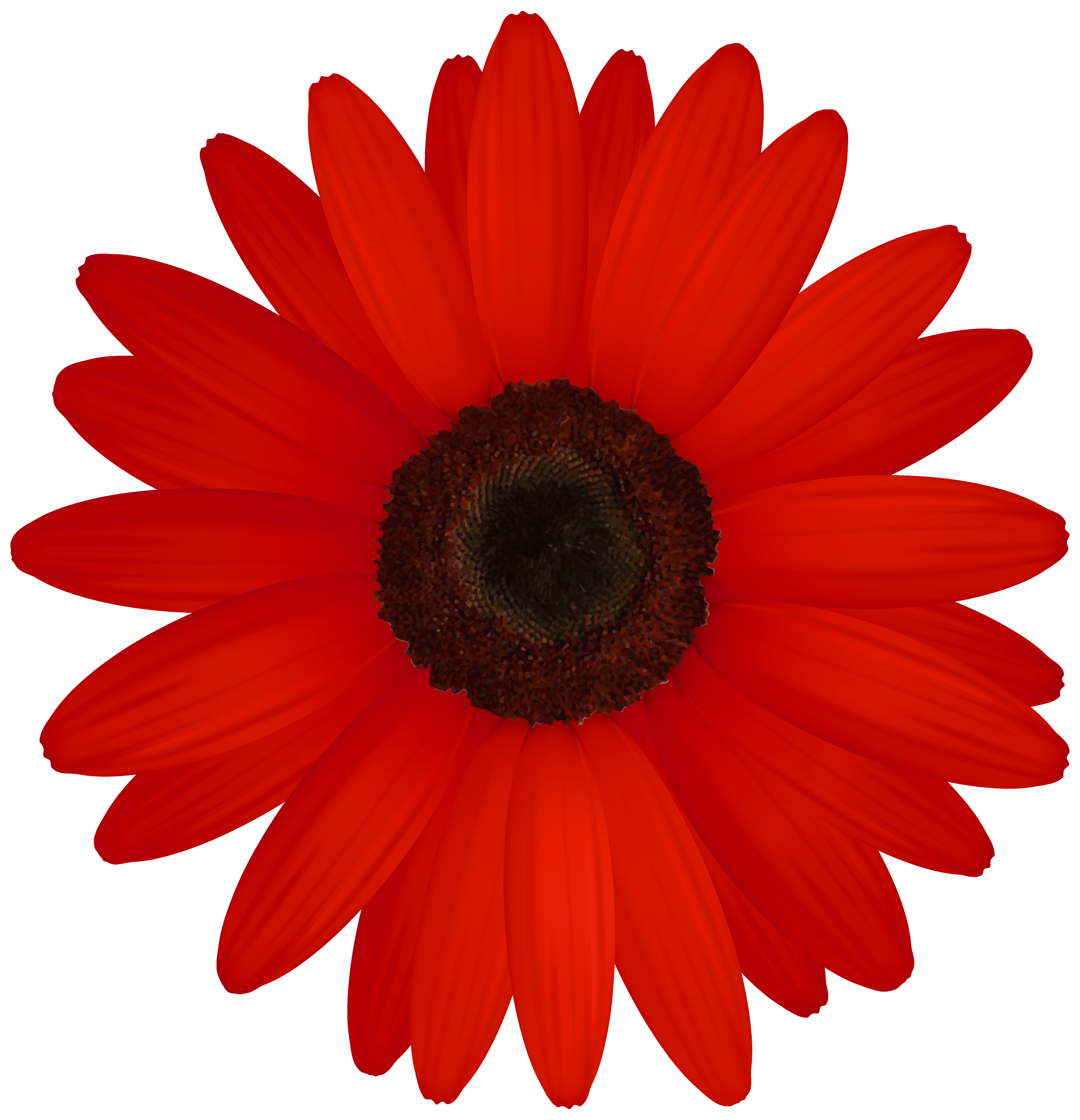 3000x3110 Red Gerber Png Clipart
