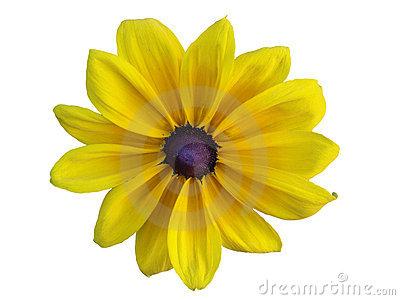 400x300 Yellow Daisy Clipart