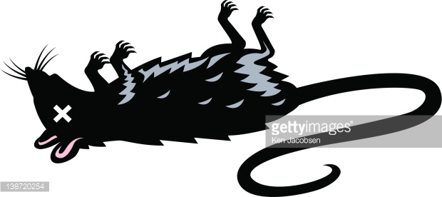 620x276 Rodent Clipart Dead Rat