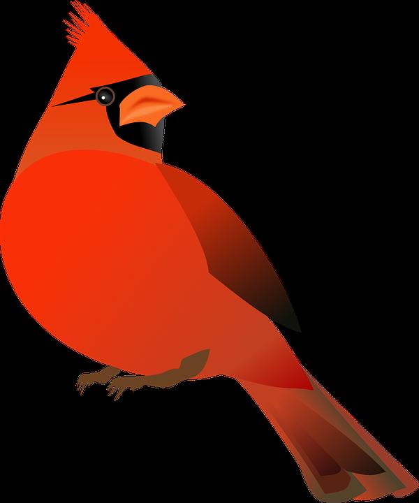 600x720 Cardinal Clipart Dead
