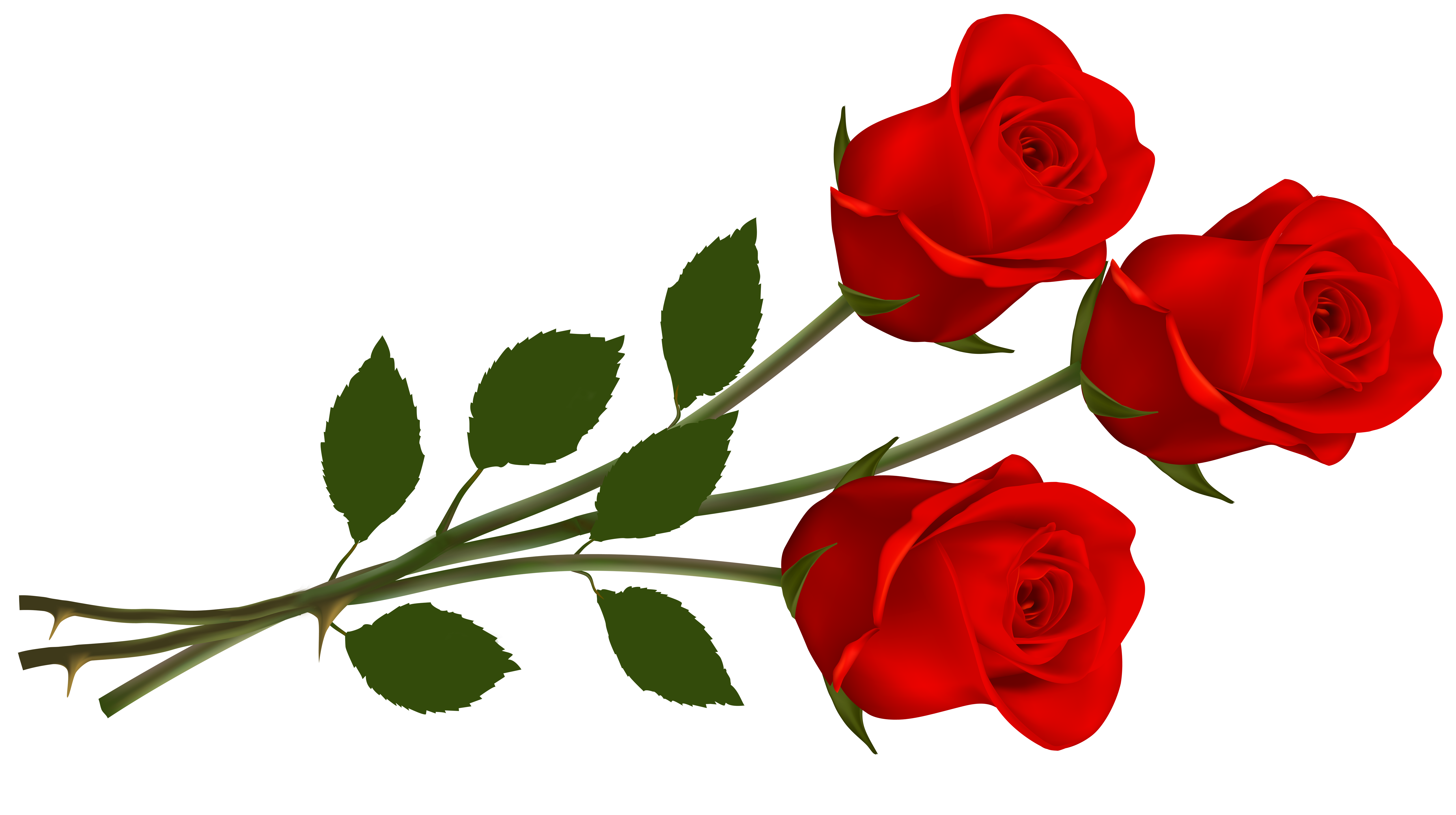 6500x3637 Free Rose Clipart