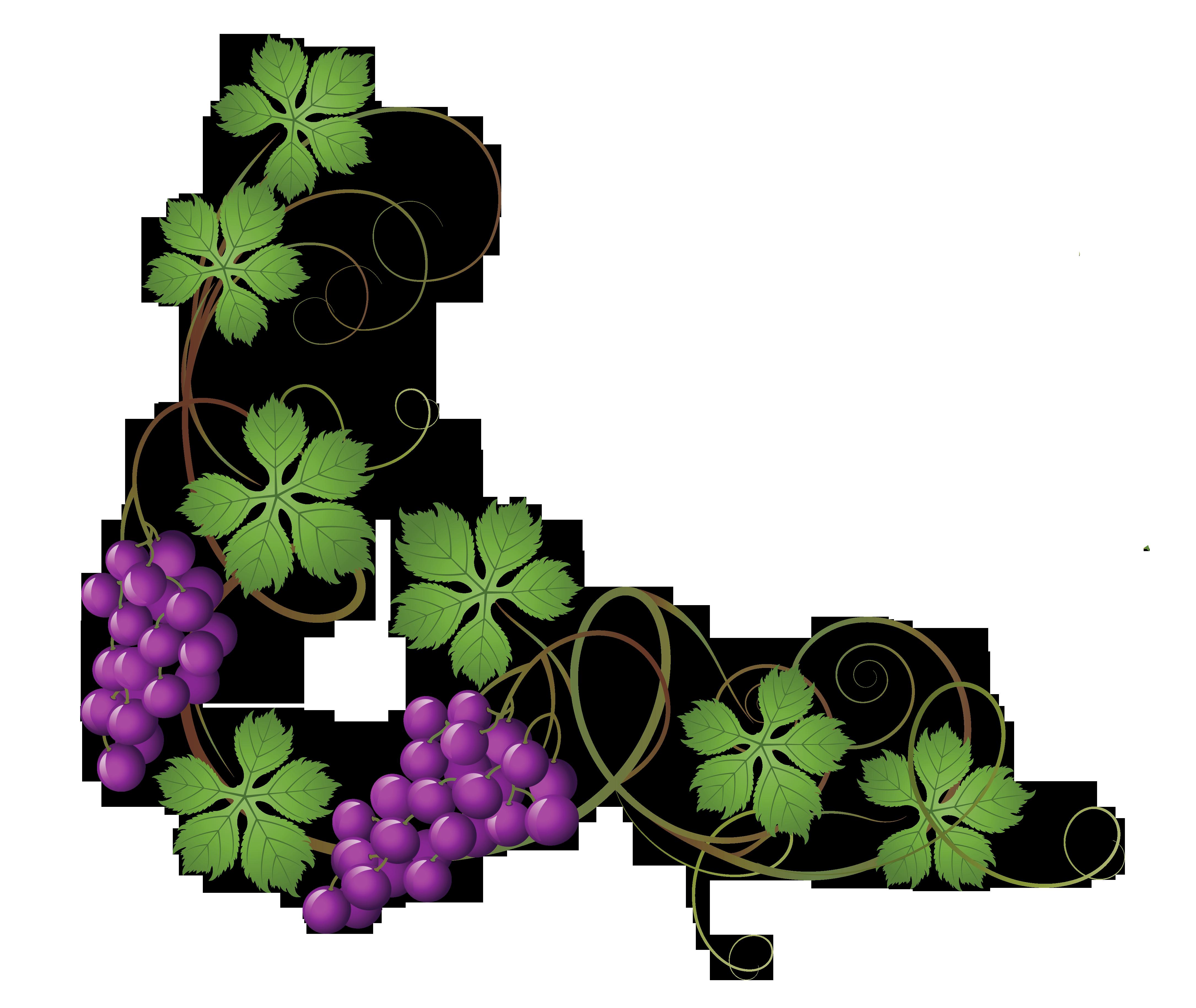 4340x3658 Decoration clipart vine