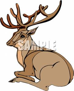 242x300 Buck With Large Antlers Laying Down Clip Art Image