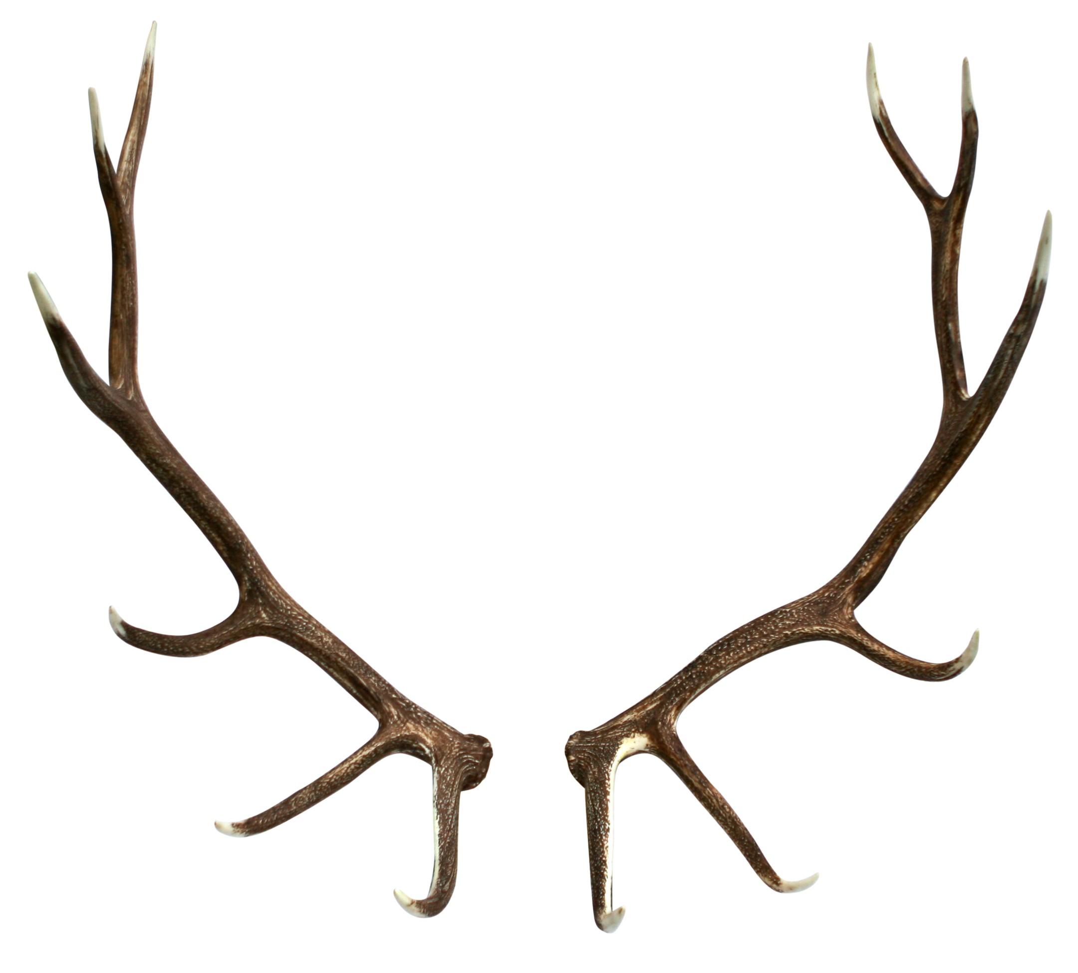 2160x1950 Antler Clipart Deer Skull