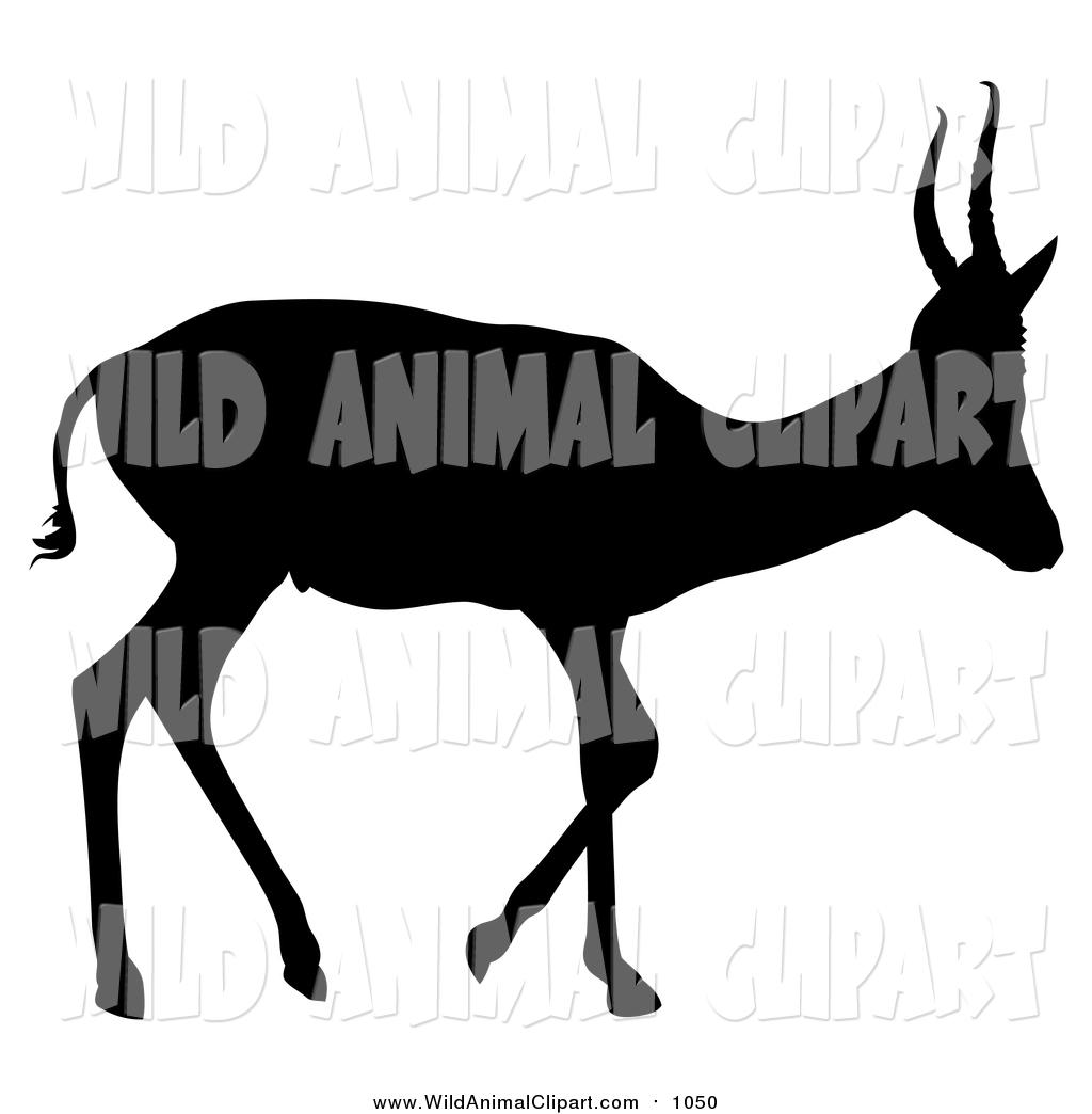 1024x1044 Royalty Free Deer Stock Wildlife Designs