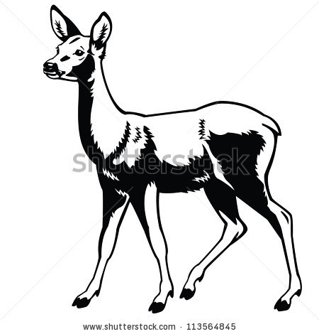 450x470 Roe Deer,vector, Black And White,side View Picture Isolated